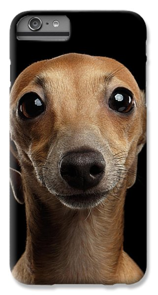 Closeup Portrait Italian Greyhound Dog Looking In Camera Isolated Black IPhone 6 Plus Case