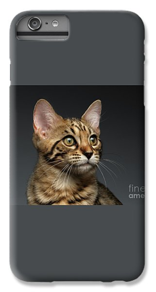 Closeup Portrait Of Bengal Male Kitty On Dark Background IPhone 6 Plus Case by Sergey Taran