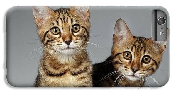 Closeup Portrait Of Two Bengal Kitten On White Background IPhone 6 Plus Case by Sergey Taran