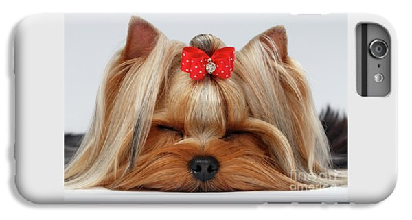 Closeup Yorkshire Terrier Dog With Closed Eyes Lying On White  IPhone 6 Plus Case by Sergey Taran
