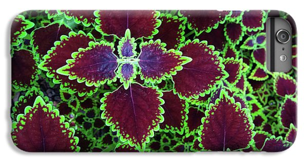 Coleus Leaves IPhone 6 Plus Case by Nareeta Martin