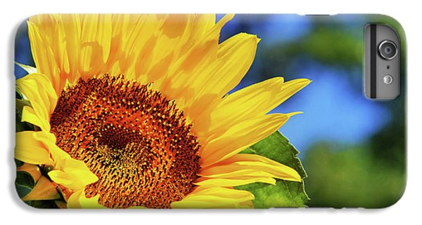 Color Me Happy Sunflower IPhone 6 Plus Case by Christina Rollo