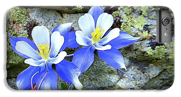 Colorado Columbines IPhone 6 Plus Case by Karen Shackles