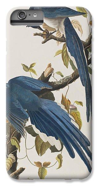 Columbia Jay IPhone 6 Plus Case by John James Audubon