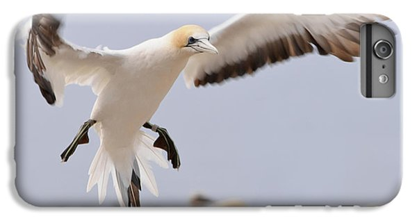 Coming In To Land IPhone 6 Plus Case by Werner Padarin
