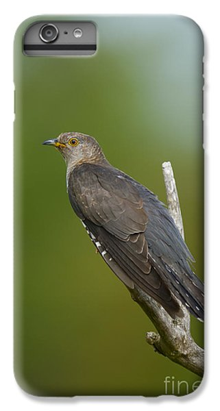 Common Cuckoo IPhone 6 Plus Case by Steen Drozd Lund