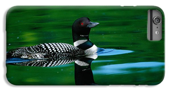 Common Loon In Water, Michigan, Usa IPhone 6 Plus Case by Panoramic Images