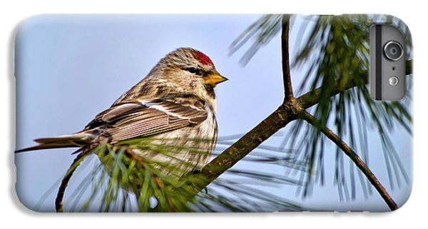 IPhone 6 Plus Case featuring the photograph Common Redpoll Bird by Christina Rollo