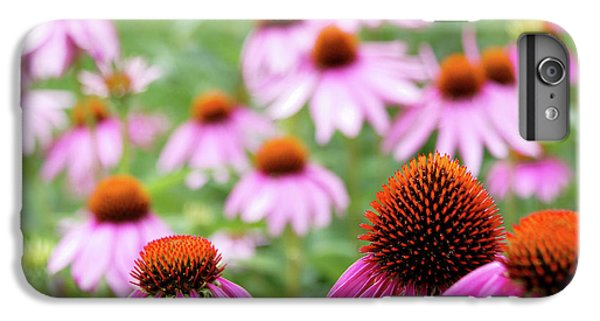 Coneflowers IPhone 6 Plus Case by David Chandler