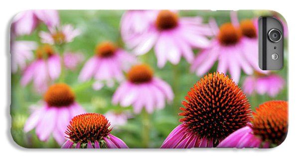 IPhone 6 Plus Case featuring the photograph Coneflowers by David Chandler