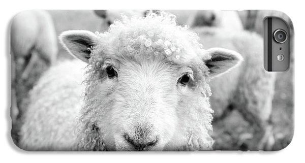 Sheep iPhone 6 Plus Case - Contentment by Pixabay
