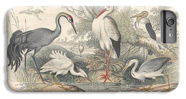 Cranes IPhone 6 Plus Case by Rob Dreyer