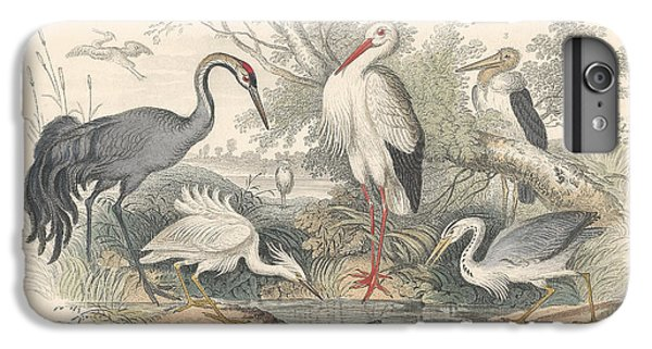 Stork iPhone 6 Plus Case - Cranes by Dreyer Wildlife Print Collections
