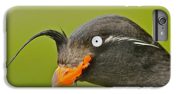 Crested Auklet IPhone 6 Plus Case by Desmond Dugan/FLPA