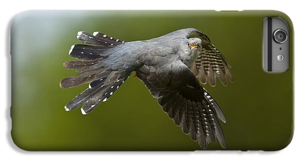 Cuckoo Flying IPhone 6 Plus Case by Steen Drozd Lund