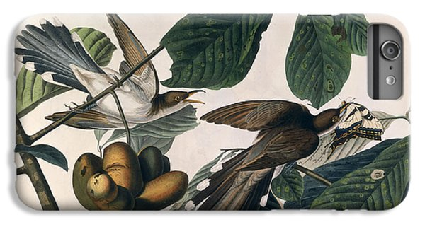 Cuckoo IPhone 6 Plus Case by John James Audubon