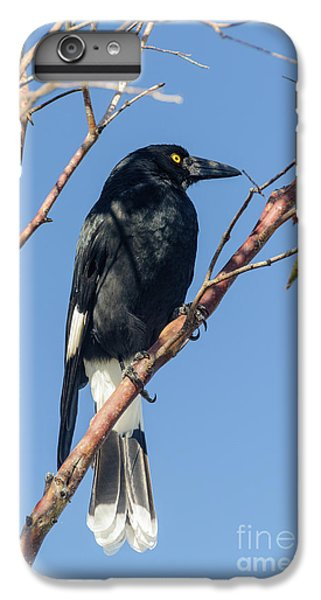 Currawong IPhone 6 Plus Case