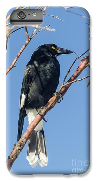 Currawong IPhone 6 Plus Case by Werner Padarin