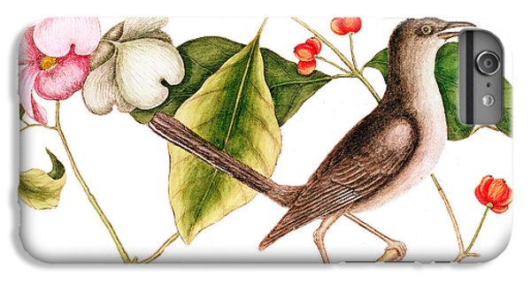 Mockingbird iPhone 6 Plus Case - Dogwood  Cornus Florida, And Mocking Bird  by Mark Catesby