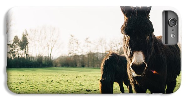 Donkey And Pony IPhone 6 Plus Case by Pati Photography