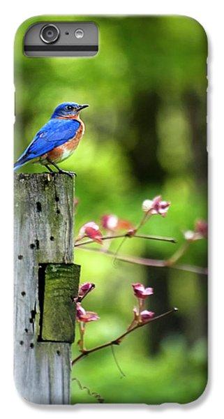 Eastern Bluebird IPhone 6 Plus Case