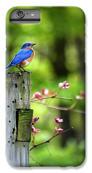 Eastern Bluebird IPhone 6 Plus Case by Christina Rollo