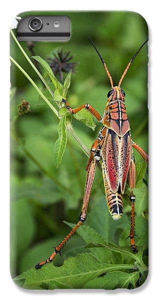 Eastern Lubber Grasshopper  IPhone 6 Plus Case