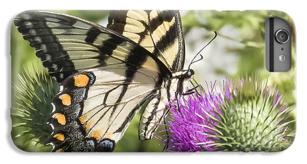 Eastern Tiger Swallowtail IPhone 6 Plus Case