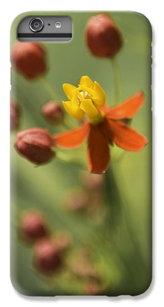 Emergence - Asclepias Curassavica - Butterfly Milkweed - South Carolina Botanical Gardens IPhone 6 Plus Case