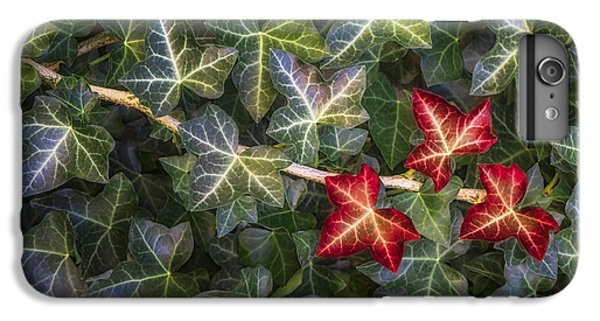 IPhone 6 Plus Case featuring the photograph Fall Ivy Leaves by Adam Romanowicz