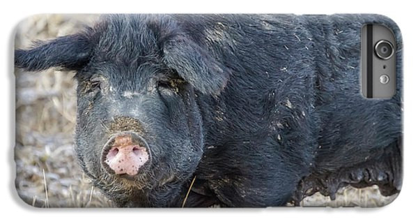 IPhone 6 Plus Case featuring the photograph Female Hog by James BO Insogna