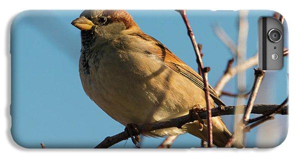 Female House Sparrow IPhone 6 Plus Case