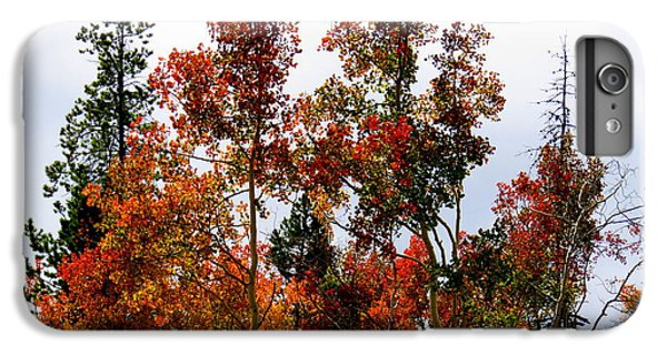 IPhone 6 Plus Case featuring the photograph Festive Fall by Karen Shackles