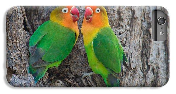 Fischers Lovebird Agapornis Fischeri IPhone 6 Plus Case