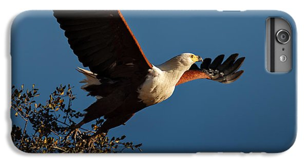 Eagle iPhone 6 Plus Case - Fish Eagle Taking Flight by Johan Swanepoel