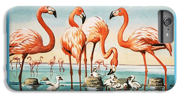 Flamingoes IPhone 6 Plus Case by English School