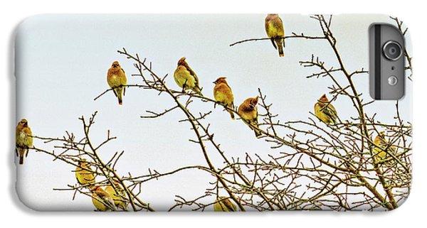Flock Of Cedar Waxwings  IPhone 6 Plus Case by Geraldine Scull