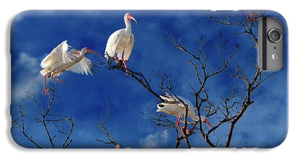 Ibis iPhone 6 Plus Case - Florida Keys The Exaggerated Ibis by Betsy Knapp