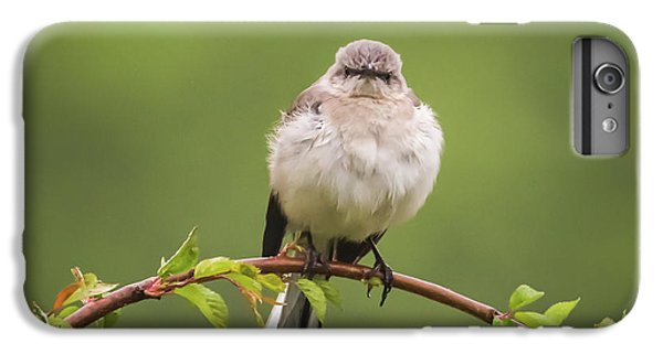 Fluffy Mockingbird IPhone 6 Plus Case by Terry DeLuco