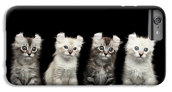 Cat iPhone 6 Plus Case - Four American Curl Kittens With Twisted Ears Isolated Black Background by Sergey Taran