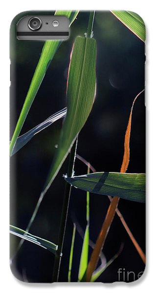 IPhone 6 Plus Case featuring the photograph Fragment by Linda Lees