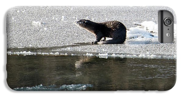Frosty River Otter  IPhone 6 Plus Case by Mike Dawson
