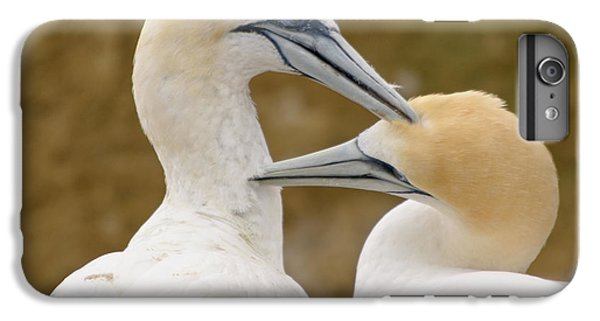 IPhone 6 Plus Case featuring the photograph Gannet Pair 1 by Werner Padarin