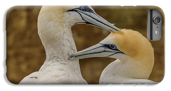 Gannets 4 IPhone 6 Plus Case
