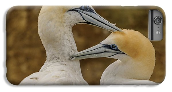 Gannets 4 IPhone 6 Plus Case by Werner Padarin
