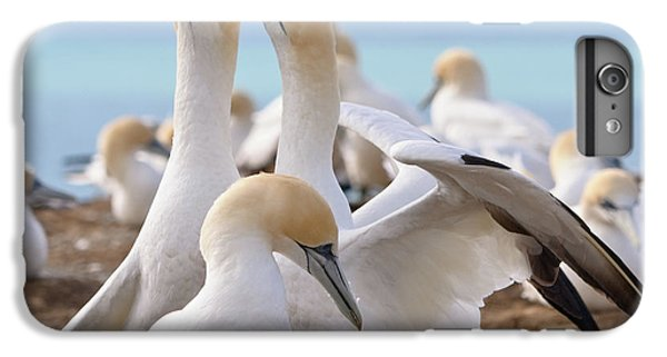 IPhone 6 Plus Case featuring the photograph Gannets by Werner Padarin