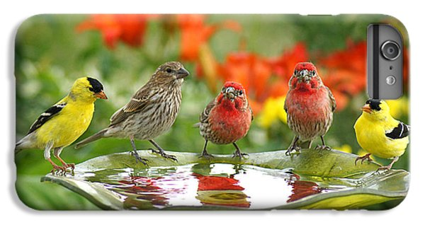 Garden Party IPhone 6 Plus Case by Bill Pevlor