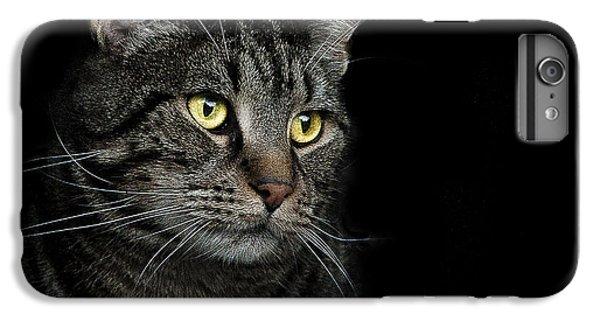 Cats iPhone 6 Plus Case - Gaze  by Paul Neville