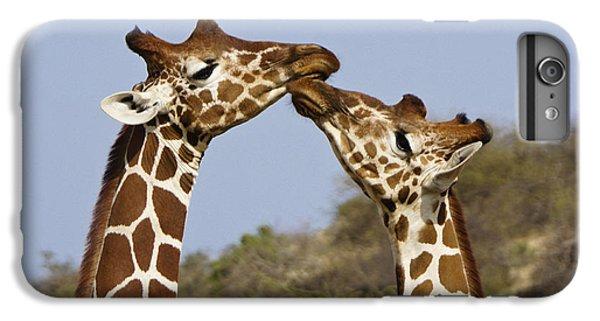 Giraffe Kisses IPhone 6 Plus Case by Michele Burgess