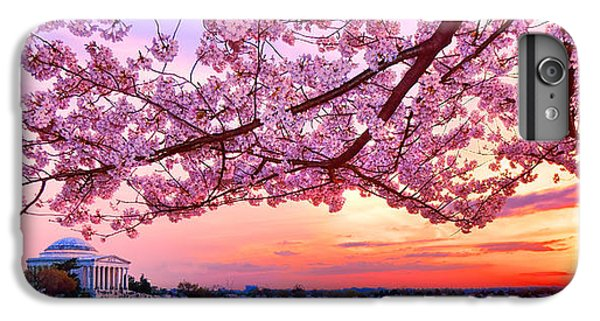 Glorious Sunset Over Cherry Tree At The Jefferson Memorial  IPhone 6 Plus Case by Olivier Le Queinec
